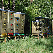 Beehives deep in the woods